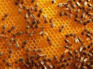 gamme secret de miel